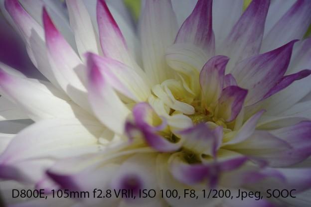 20120905-DSC_0049_D800e