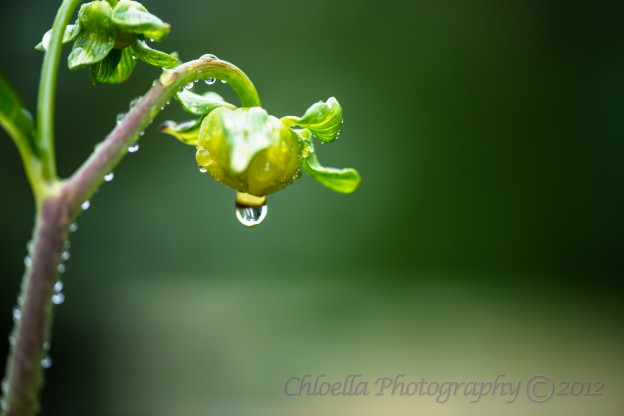 Reflections of a Water Droplet