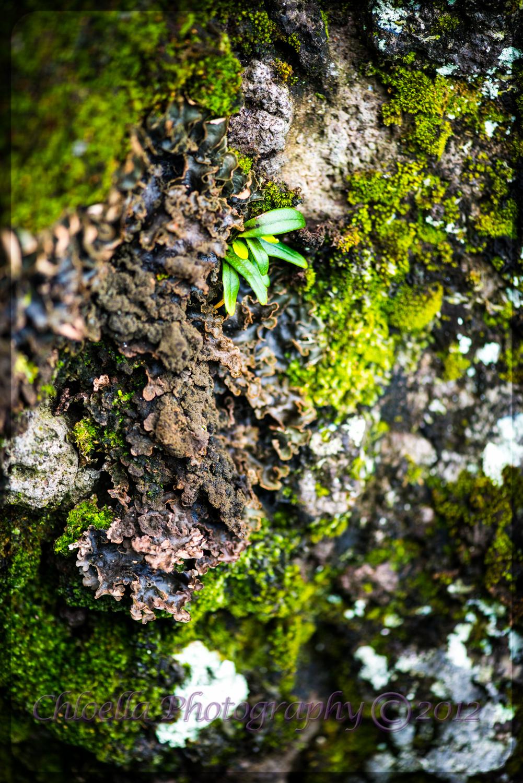 Tropical Lichen